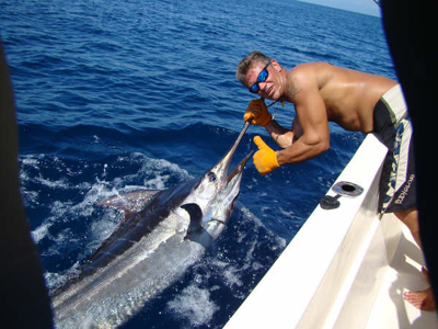 marlin-joe-bond-kinembe-small.jpg