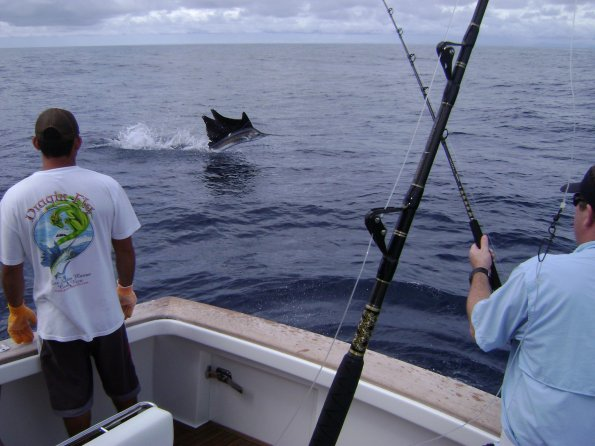sailfish draginfly